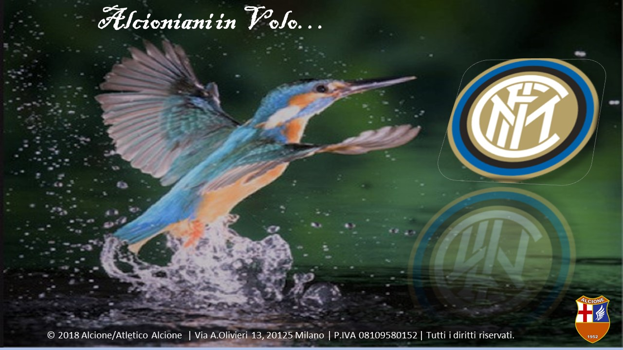 Alcioniani in Volo INTER